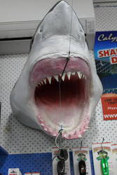 a Sharks head above the adnmin area of the store
